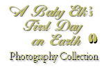 A Baby Elk's First Day Photography CD Collection